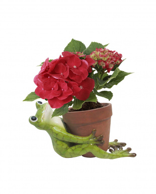 Animal Pot  Cover(Frog Hold)見る