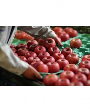 Fruit tea りんご見る