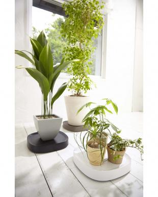 ホワイト  Plantable キャスター付き植木鉢トレー見る