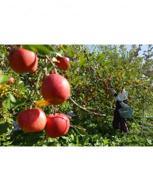 りんごジュース1000mL見る
