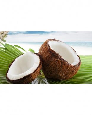 炒め油にも 無香ココナッツオイル見る