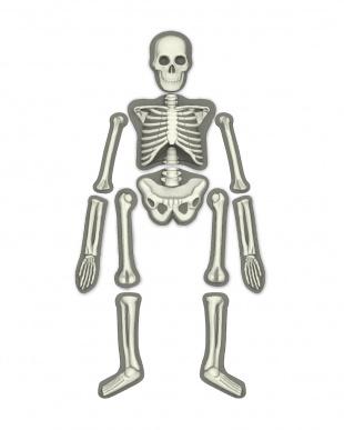 モールド&ペイント 人体骨格グロー見る