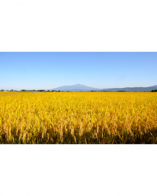 化学肥料ゼロ 特別栽培米 山形産つや姫5kg/送料込見る