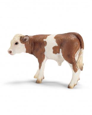 牛セット見る
